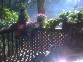 A New Day Dawns; Westfield, NJ (Photography by Joanne Edith)