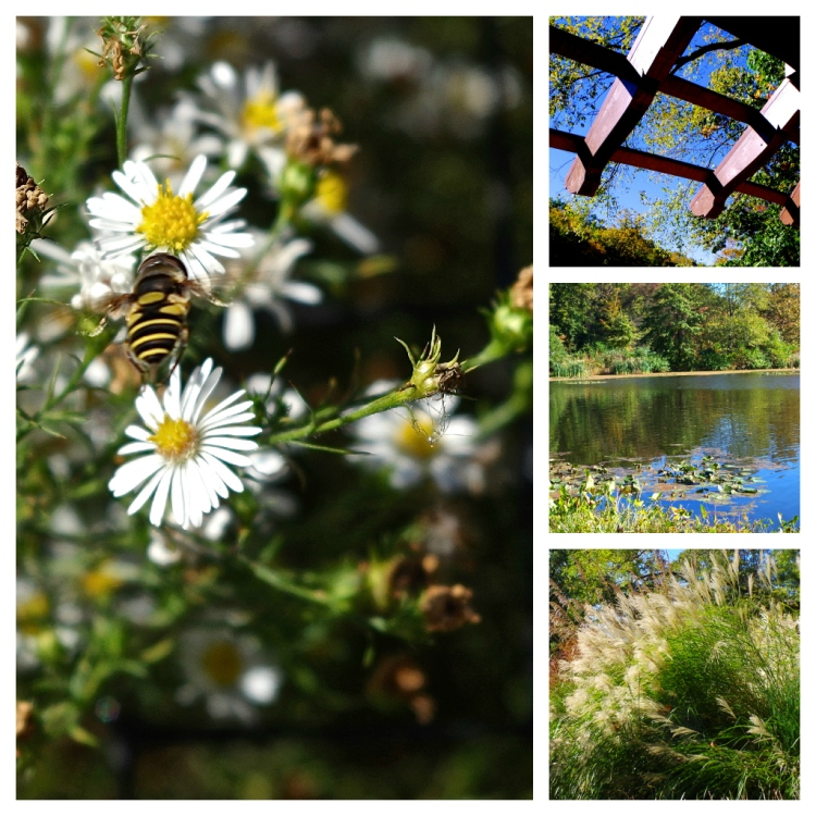 Echo Lake Flora and Fauna (September, 2012)