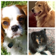 Our Canine Companions