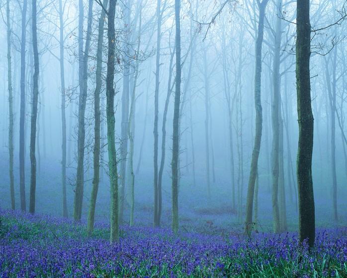 Fog Shawl of Silence (MS ClipArt)