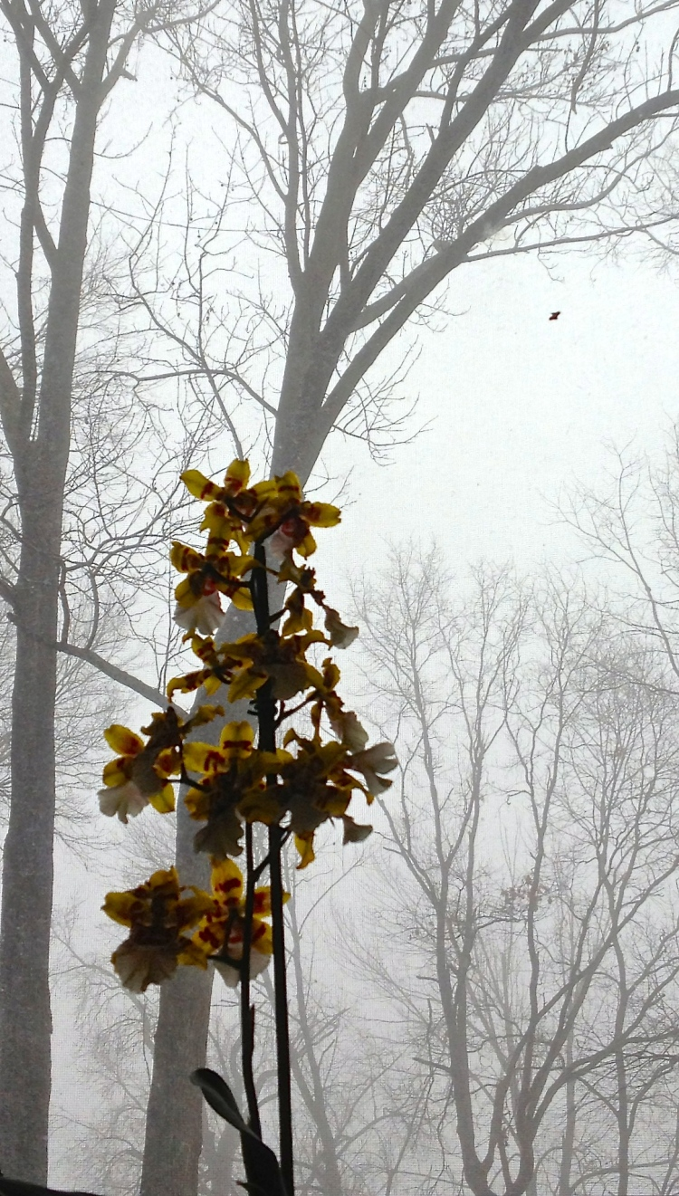 Winter Orchid (Photography by Joanne Edith)