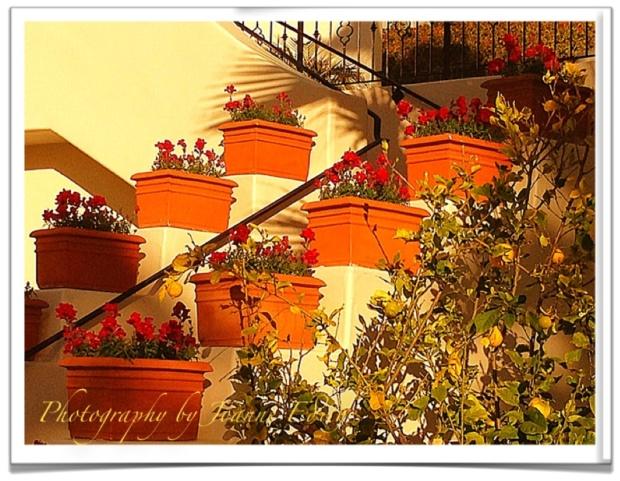 """Santa Barbara Sun December 2011 """"Reconsideration"""""""