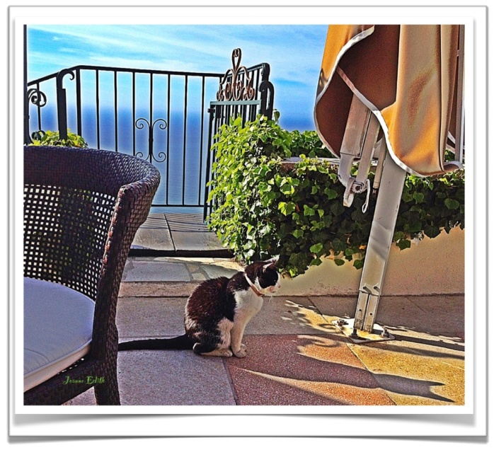 As we gazed, awestruck, at the sparkling Mediterranean, our feline friend was mesmerized by his own long shadow, enhanced by the rays of the morning Provence sun.