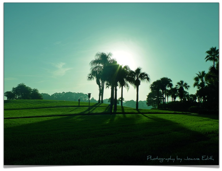 First Light: Polynesian Palms Pentax K30, ISO 200, 21.2 mm, f/14, 1/400 sec.
