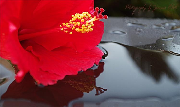 Hibiscus I (Pentax K30, ISO 400, 30.6mm, f/5.0, 1/40 sec.)