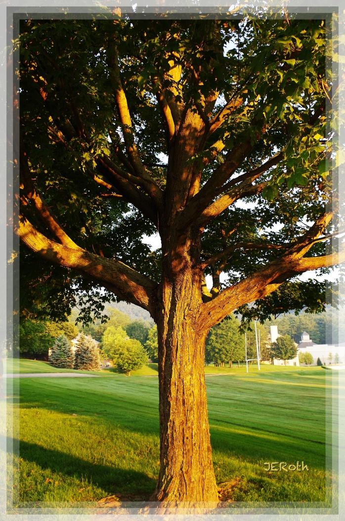 Tree of Life (Pentax K30; ISO 200, 20mm, f/7.1, 1/50 s.)