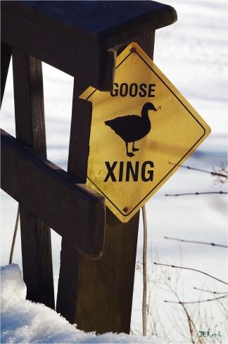Goose Crossing