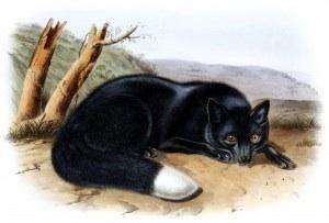 Painting by John James Audubon, celebrated artist and naturalist.