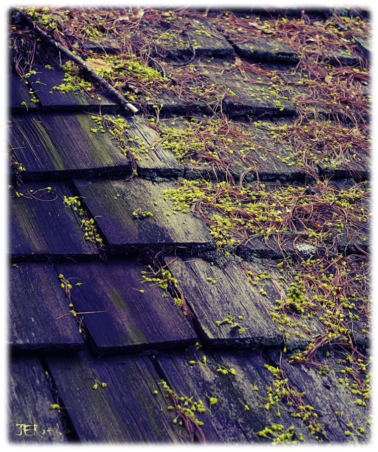 Collection of pollen and tree pods, resting on shingled eaves of country inn.