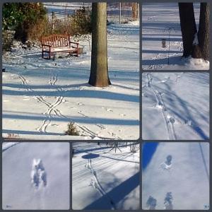 Footprints, January 2015