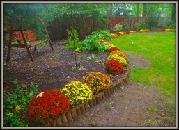 Backyard Swing, amid Vibrant Autumn Colors.